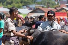 Buffelsmarkt in Rantepao Stock Foto
