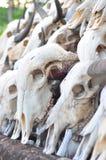 Buffelsschedel Stock Fotografie