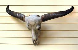 Buffelsschedel Stock Afbeeldingen