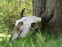 Buffelsschedel Royalty-vrije Stock Afbeeldingen