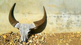 Buffelsschedel met hoornen stock afbeelding