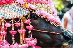 Buffelsschoonheid in Thais begin van Boeddhistische Lentl Stock Fotografie
