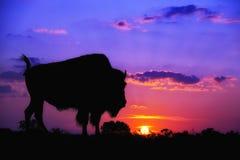 Buffelssilhouet bij zonsopgang Royalty-vrije Stock Foto's