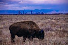 Buffelszonsondergang in Denver, Colorado royalty-vrije stock foto's