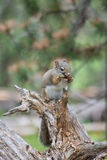 Buffet for a Squirrel Royalty Free Stock Photos