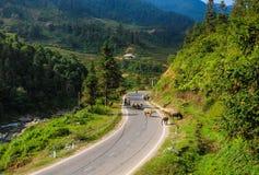 Bufflar på den lantliga vägen i Sapa, Vietnam Royaltyfria Foton
