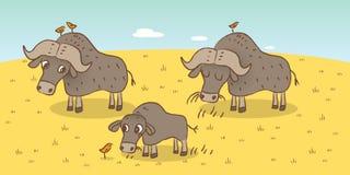 Buffle africain illustration stock