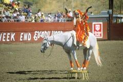 Buffonerie del rodeo su a cavallo Fotografie Stock Libere da Diritti