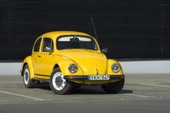 bug żółty Fotografia Stock
