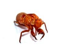 Bug 1 Stock Photo