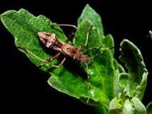 bug zdjęcie stock