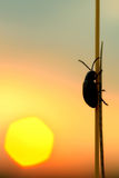 Bug. Alone big bug on the sunset Stock Image