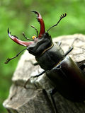 Bug. A standing bug which represent the power on the top of nature Stock Photography