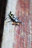 Bug. A macro photo taken off a bug feeding at a park Stock Photos
