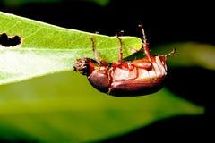 A bug Royalty Free Stock Photos