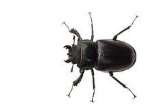 Bug. Isolated on white background stock photos