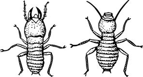Bug Royalty Free Stock Images