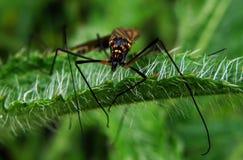 Free Bug Stock Photo - 41443590