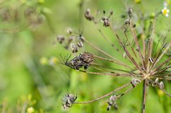 bug Fotografia Royalty Free