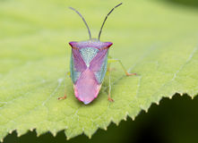 Bug Stock Photography