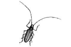 Bug Stock Photo