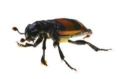 Bug. Close-up Stock Photography