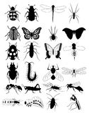 Bug royalty free illustration