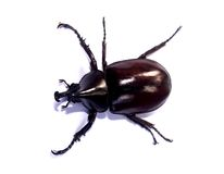 Bug 90 Stock Images