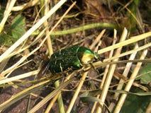 Bug2 Imagens de Stock