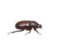 Free Bug Stock Photos - 9620823