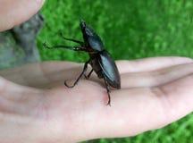 Bug acrobat Stock Image