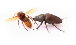 Bug attack Royalty Free Stock Photo