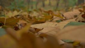 Bug on Autumn Leaves stock footage