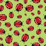 bug bezszwowa Zdjęcie Royalty Free