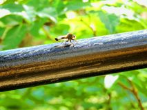 Bug. This black bug landing on the railing looks like a mix between a dragon fly and a horse fly royalty free stock images