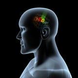 Bug in brain Stock Photo