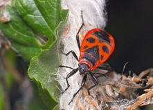 bug brand Arkivbilder
