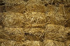 Bug bricks of yellow hay, close-up stock photos