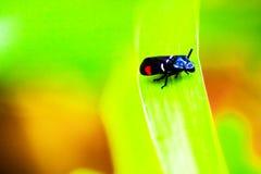 Bug,bug on a leaf. Animal wild life Royalty Free Stock Photo