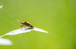 Bug. On a leaf in macro shoot in a park in Simeria from Romania Royalty Free Stock Image