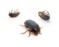 Bug Royalty Free Stock Photography