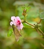 Bug Stock Photos
