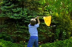 Bug Catching 2. Young Boy Catching Bugs In His Yard Royalty Free Stock Image
