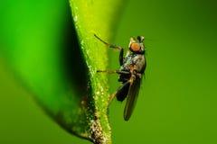 Bug Royalty Free Stock Photo
