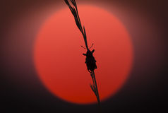 Bug climbing in sunset light Stock Photos