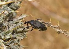 The Bug Royalty Free Stock Photography