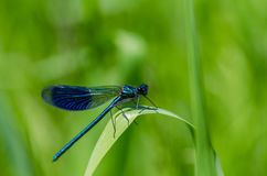 Bug, Close-up, Damselfly Royalty Free Stock Photos