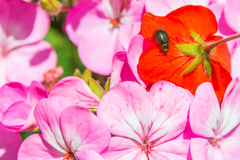 Bug in colorfull world Royalty Free Stock Photos