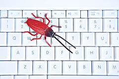 Bug on Computer Keyboard Royalty Free Stock Photography