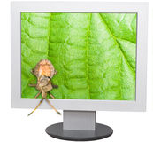 Bug and computer screen Stock Photography